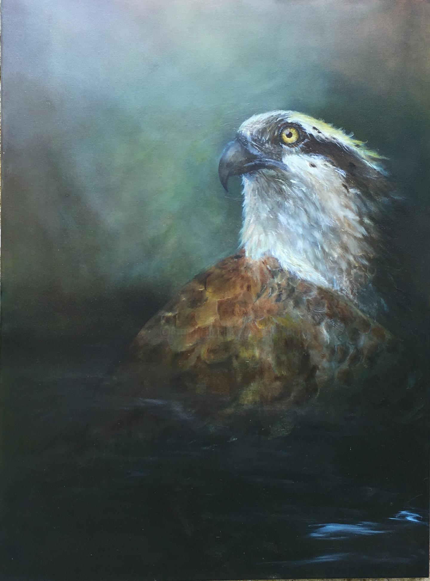 Magali Batté Gauthier (M B) - Osprey